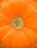 Pumpkin close up Royalty Free Stock Image
