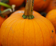 Pumpkin Close-up Royalty Free Stock Images