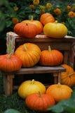 Pumpkin. Close up on a grass Stock Photography