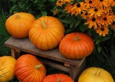 Pumpkin. Close up on a grass Stock Images