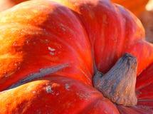 Pumpkin. Close up of large orange pumpkin Stock Photo