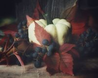 pumpkin close-up red leaves blue berries still life autumn royalty free stock images