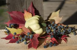 pumpkin close-up red leaves blue berries still life wood background outdoor garden autumn stock photo