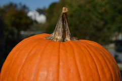 Pumpkin Close up Royalty Free Stock Photography