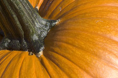 Pumpkin closeup Stock Photography