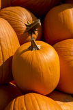 Pumpkin closeup Stock Photos