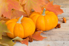Pumpkin Closeup Stock Image