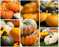 Pumpkin collage Stock Photos