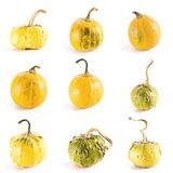 Pumpkin collection. High resolution set of nine diverse colorful pumpkins on white background stock photography