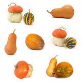 Pumpkin collection Royalty Free Stock Images