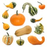 Pumpkin collection Stock Image