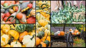 Pumpkin collection in fall Royalty Free Stock Photo