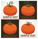 Pumpkin collection Stock Images