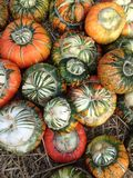 Pumpkin Collection. A selection of pumpkins for Halloween Royalty Free Stock Photo
