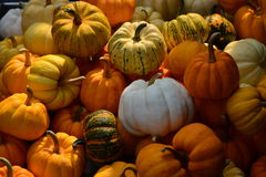 Pumpkin. The color of variety pumphin Royalty Free Stock Image