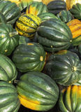 Pumpkin. A colorful fresh pumpkins, background Royalty Free Stock Images