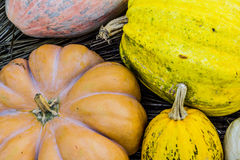 Pumpkin. Colors and shapes from pumpkin Stock Images