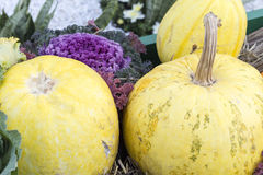 Pumpkin. Colors and shapes from pumpkin family on sale Royalty Free Stock Photography