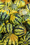 Pumpkin. Colourful and fresh pumpkins, background Stock Image