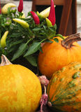 Pumpkin composition stock photography