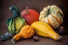 Pumpkin composition. Halloween pumpkin still life composition Stock Photo
