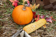 Pumpkin and corn Royalty Free Stock Images