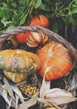 Pumpkin and corn in basket Royalty Free Stock Images