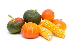Pumpkin and corn cobs close up. white background. Stock Images