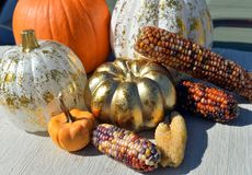 Pumpkin Corn Halloween thanksgiving decoration Royalty Free Stock Image