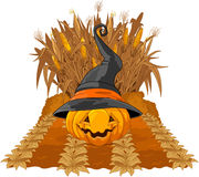 Pumpkin on corn maze Royalty Free Stock Image