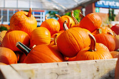 Pumpkin Crate. Image of a crate of pumpkins for sale at a local market Royalty Free Stock Photography