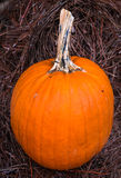 Pumpkin and Crawler Royalty Free Stock Image