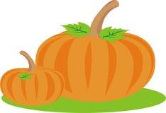 Pumpkin crop Stock Photos