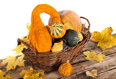 Pumpkin crop Stock Photo