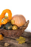 Pumpkin crop Stock Images