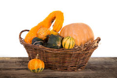 Pumpkin crop Royalty Free Stock Photos