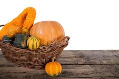 Pumpkin crop autumn Royalty Free Stock Photo