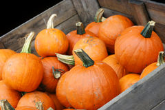 Pumpkin Crop in Cart with copy space. Stock Photography