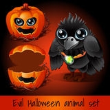 Pumpkin and crow sullen on a dark red background Stock Photos