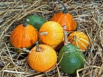 Pumpkin, cucurbita pepo. Colorful squash collection. Autumn setting with pumpkins Stock Photography