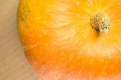 Pumpkin, cucurbita pepo Stock Image