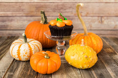 Pumpkin cupcake with fall gourds Royalty Free Stock Image
