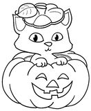 Pumpkin and cute cat bw Royalty Free Stock Photo