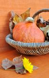 Pumpkin and daisy flower Royalty Free Stock Photos
