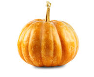 Pumpkin dark yellow color on a white background Stock Images