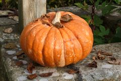 Pumpkin on the coping of a well. Pumpkin and dead leaves on the coping of a well in a garden during autumn Royalty Free Stock Photos