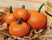 Pumpkin decoration Stock Image