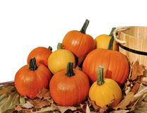 Pumpkin decoration Stock Photos