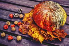 Pumpkin with decoration. Autumn decoration with pumpkin, leaves, walnuts, cones and physalis Stock Photography
