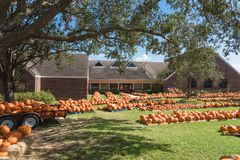 Pumpkin patch church Pearland royalty free stock image